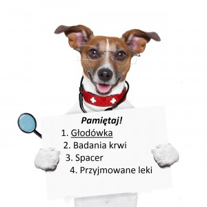 22666437-medical-doctor-dog-holding-a-blank-banner-Stock-Photo