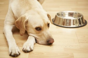 Why Do Dogs Move Their Food Bowls